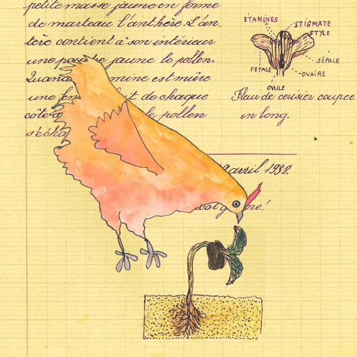 Pecking Chicken collage